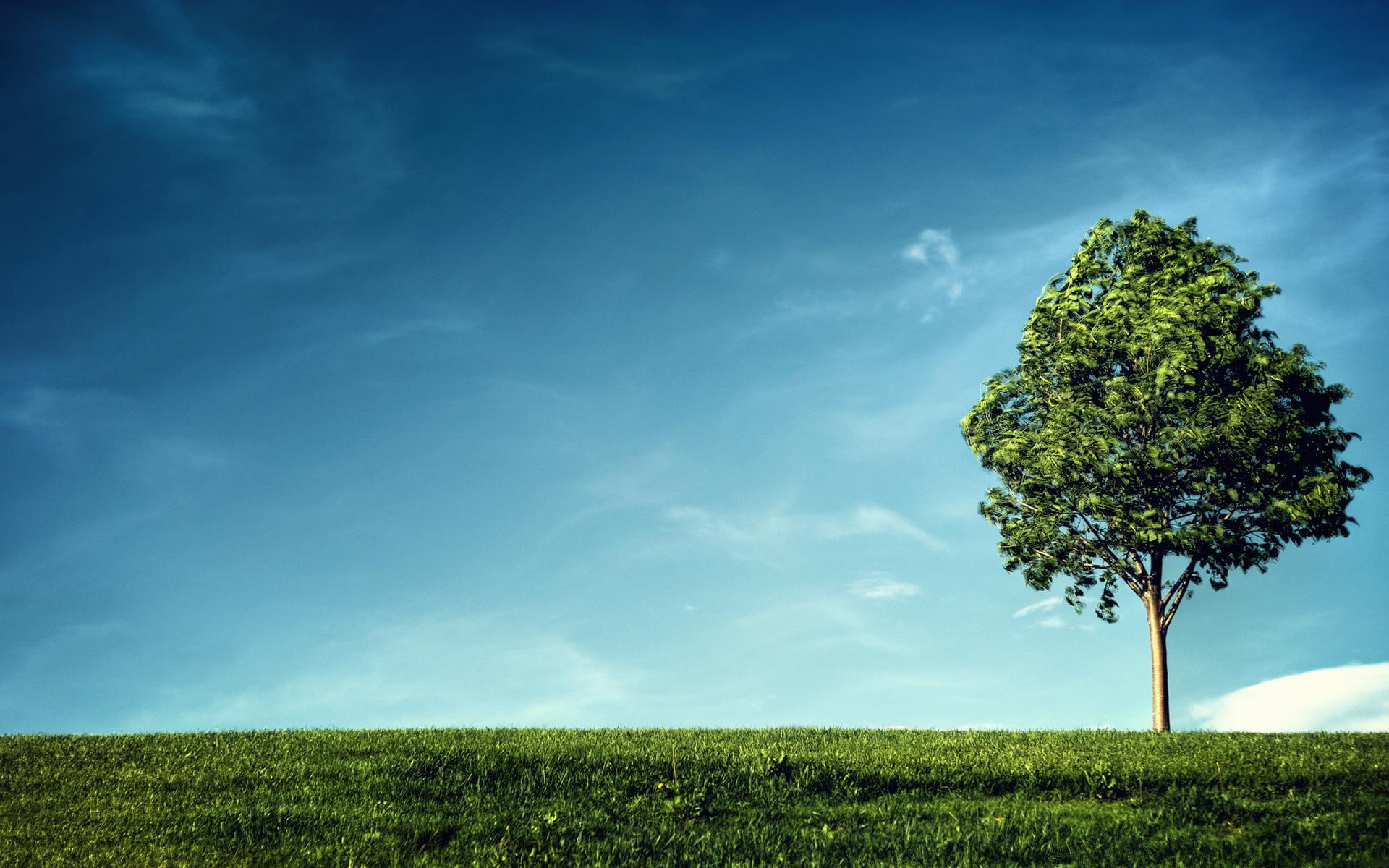 tree-sky-blue-sky-grass-nature