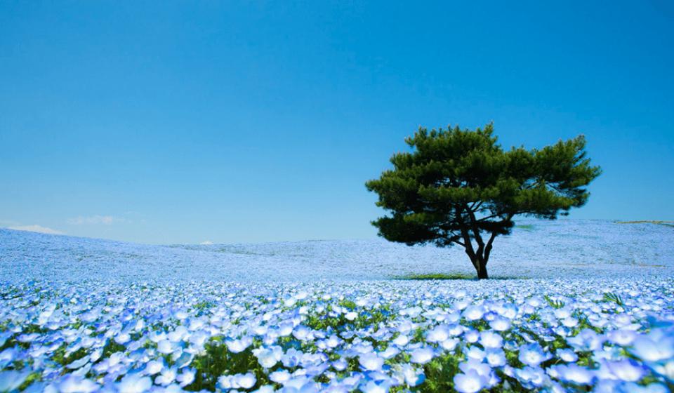 ひたち海浜公園の画像_茨城県の観光名所